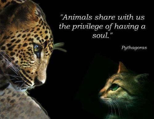 Animals-share-with