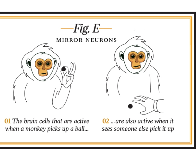 monkey-mirror-neurons